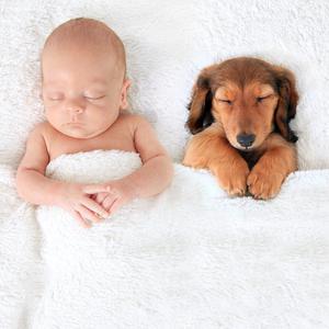 Nowy członek rodziny, czyli jak przygotować psa na dziecko?